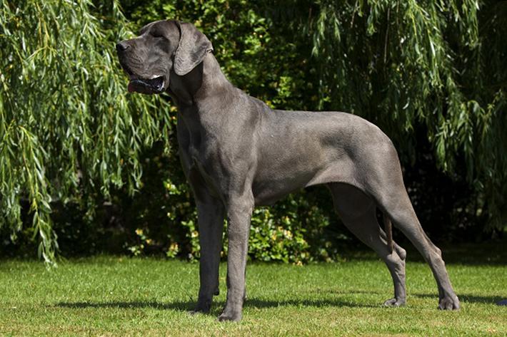 Dennoch scheint es einige Gründe zu geben, weshalb schwarze Hunde und Hündinnen immer weniger als Haustier auserwählt werden. (#02)