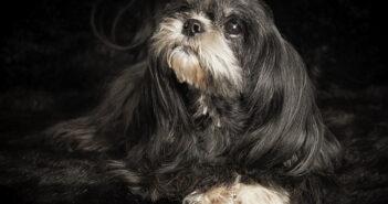 Schwarze Hunde: Keiner will sie haben!
