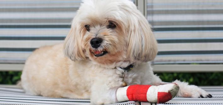 Versicherungen für den Hund: Was man braucht und was nicht
