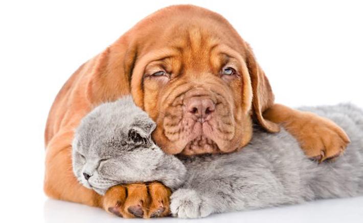 Versicherungen: Welche sind für den Hund überhaupt nötig? (#01)