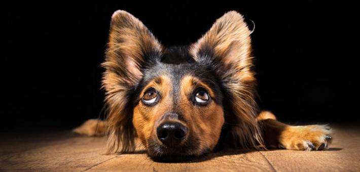 Mittelohr-Verletzung beim Hund: Ursache, Symptome & Behandlung