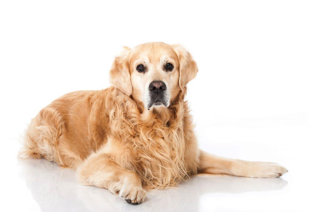 Bei älteren Hunden ist die Bindung zum Herrchen sehr wichtig