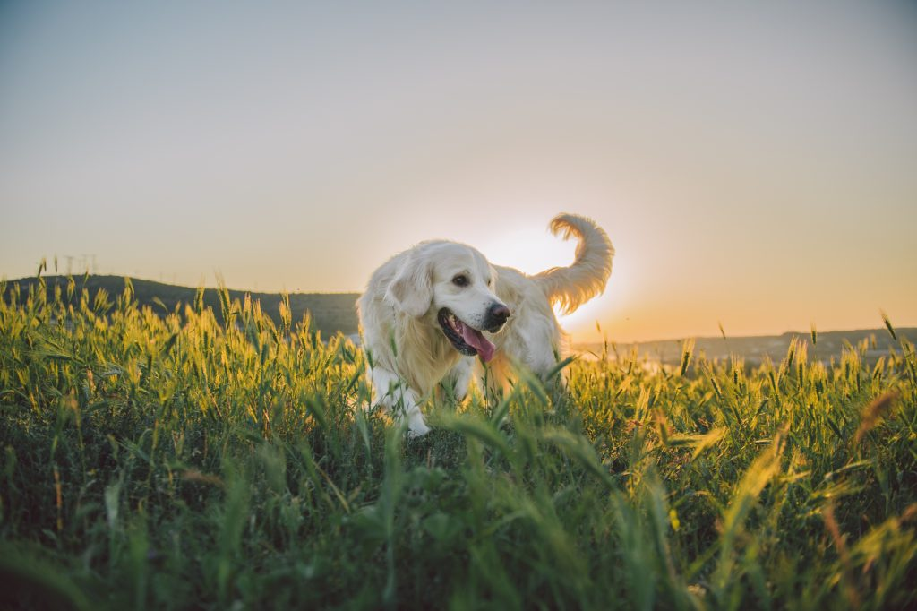 Hier darf der Hund toben aber auch gut mit ihm lernen kann man hier, keine Ablenkung, jede Menge Platz