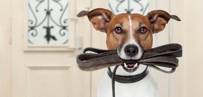Hund ableinen: Ein sicherer Rückruf ist Grundvoraussetzung