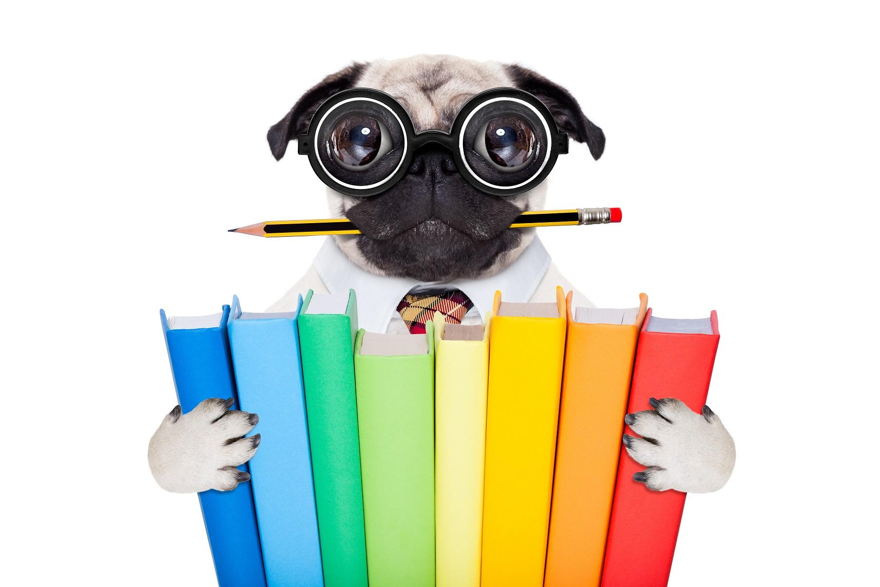 hundebrille kaufen oder wozu braucht mein hund eine brille. Black Bedroom Furniture Sets. Home Design Ideas