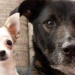Hundesteuer FAQ: Die Antworten auf alle wichtigen Fragen