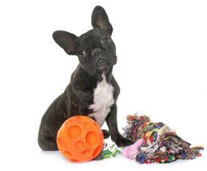 Generell haben die Gemeinden das Recht, die Hundesteuer zu erheben. (#02)