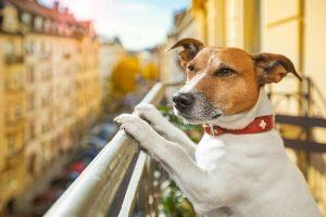 Die Hundesteuer ist eine direkte Steuer, der Steuerträger und Steuerpflichtiger ist der Hundehalter (#03)