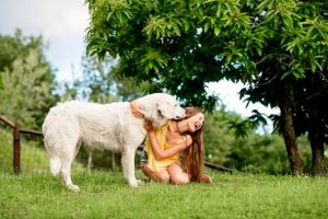 In Deutschland legen grundsätzlich die Kommunen die Höhe der Hundesteuer fest.