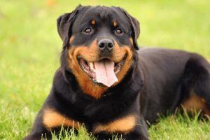 Ist es gerechtfertigt, wenn Hundebesitzer für Kampfhunde mehr Hundesteuer bezahlen müssen?