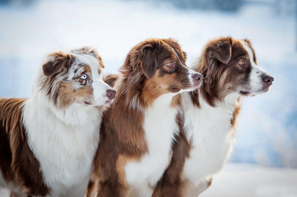 Mit drei Hunden ist immer was los