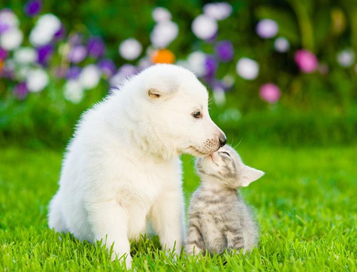Am einfachsten ist es, zwei junge Tiere gleichzeitig anzuschaffen. (#01)