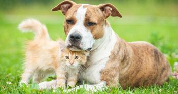 Hund und Katze: So klappt die Eingewöhnungszeit