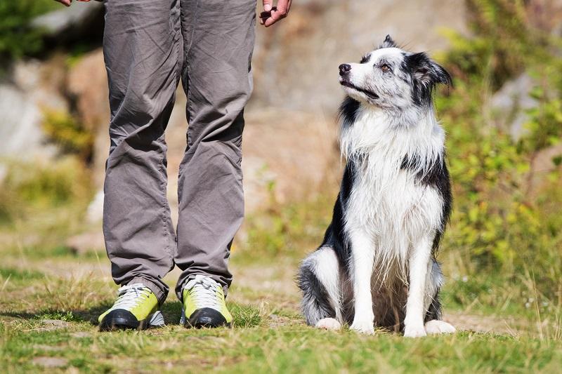 Alle Hunde brauchen eine gute Erziehung. Als Rudeltiere brauchen sie feste Strukturen. Vor allem Hunde mit ausgeprägtem Jagdtrieb und Beschützerinstinkt müssen in der Hundeschule viel lernen. (#03)