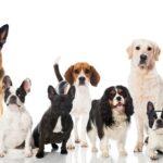 Hunde: Alle Infos für Anfänger!