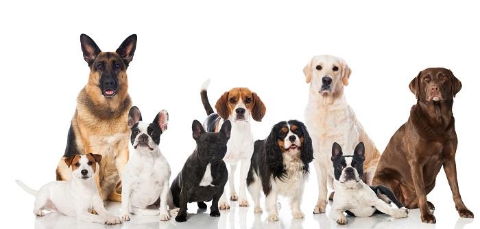 Hunde für Anfänger - auf den Hund gekommen