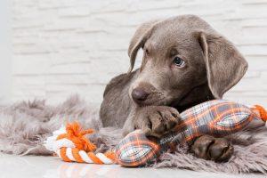 Ob in der Wohnung oder in einem Einfamilienhaus, Hunde sind anspruchsvolle Gefährten und brauchen viel Aufmerksamkeit, Bewegung und Erziehung. (#01)