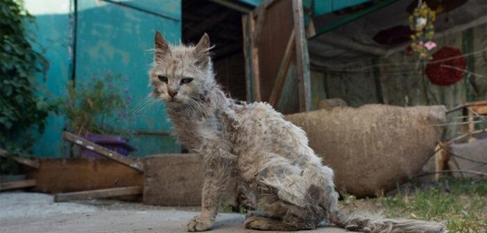 Tierrettungsdienste in Deutschland: Gibt es einen bundesweiten Tiernotruf?