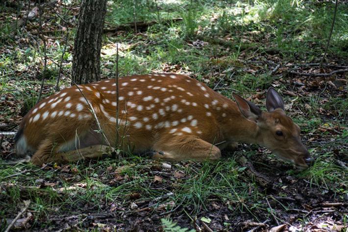 Nicht nur die eigenen Haustiere liegen den Menschen am Herzen, auch bei den Wildtieren kann es sein, dass eine erste Hilfe notwendig wird. (#01)