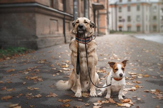 Eine tierfreundliche Unterkunft ist gefunden und nun geht es nur noch darum herauszufinden, wie sich Dresden am besten mit dem Hund erkunden lässt. (#01)