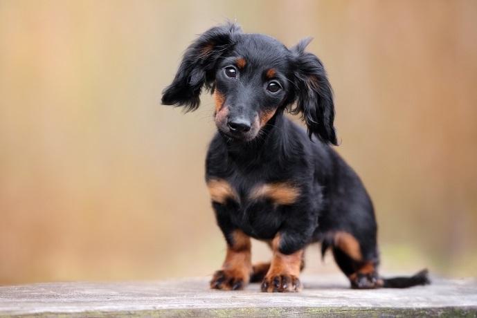 Kann bei diesem treuen Hundeblick wird jedes Herz aus Stein zu Pudding. (#10)
