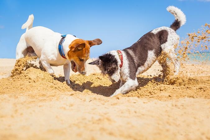 Glückliche Hunde: (#12)