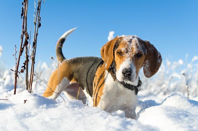 Hund im Schnee: (#14)
