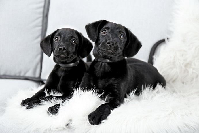 Bei diesen schwarzen Hunden wurde alles richtig gemacht: (#19)