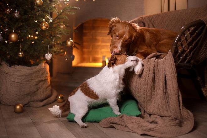 Knuddeliger Hundewelpe. (#02)