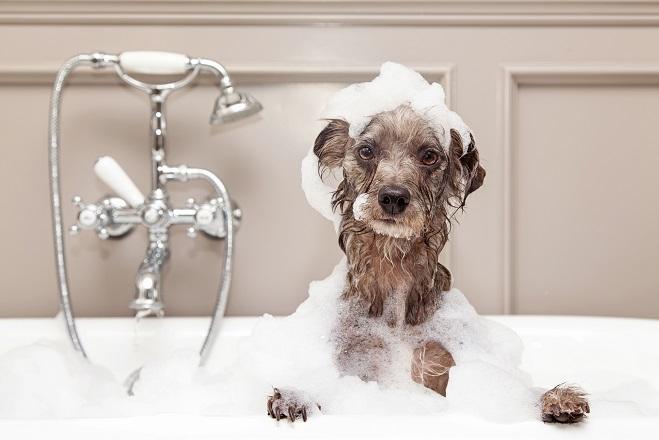 Hund beim Waschtag. (#03)