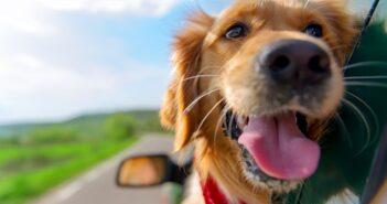25 Hundebilder: Süße, lustige und schöne Bilder von Hunden