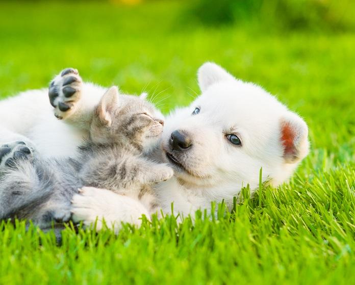 Wie Hund und Katze: (#07)