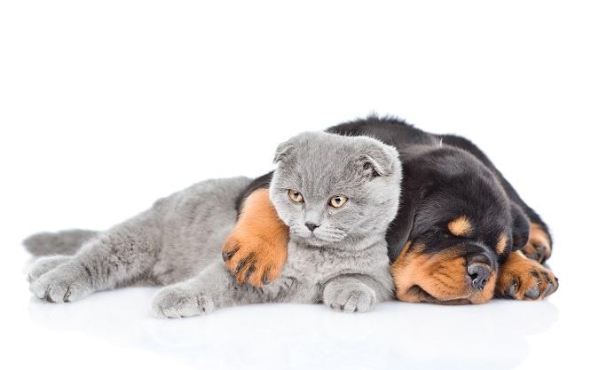Großer Hund und große Katze: (#08