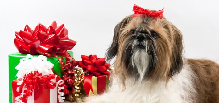 Die 10 schönsten Weihnachtsgeschenke für Hunde