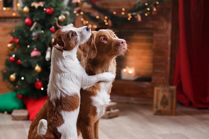 Nasses Wetter ist ungünstig für alle Hundehalter: Der Liebling auf vier Pfoten ist von oben bis unten nass, der Bauch ist vollgespritzt und die Pfoten besonders dreckig.(#04)
