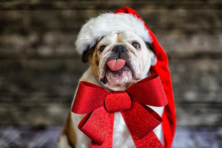 Wer kann einem solch süßen Geschenk widerstehen? Damit sich Ihre Fellnase in diesem Jahr auch unter dem Baum freuen kann, braucht es einfach die richtigen Geschenke. (#06)