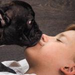 Ein Bellen sagt mehr als tausend Worte: Wie Hunde sich mitteilen