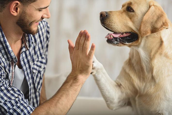 Die Beziehung zwischen einem Hund und seinem Herrchen oder Frauchen kann schon etwas ganz Besonderes sein. Wenn es zwischen ihnen so richtig gefunkt hat, sind sie ein Herz und eine Seele und verstehen sich blind. (#01)