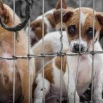 Der Hundemarkt in Belgien: ein schwieriges Pflaster