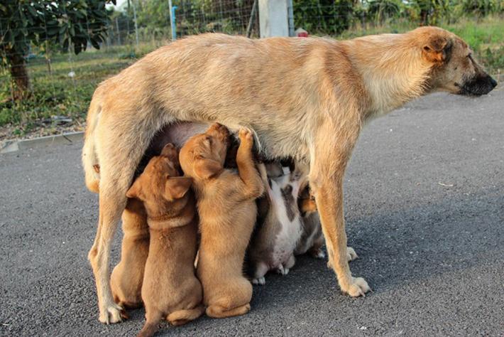 Die Junghunde sind oft sehr krank und können frühzeitig sterben. Wer auf dem Tiermarkt einen Hund kauft, muss damit rechnen, dass dieser schon bald eingeschläfert werden muss. Darum muss man standhaft bleiben, das ist die einzige Chance, die Hundevermehrung aufzuhalten. (#03)