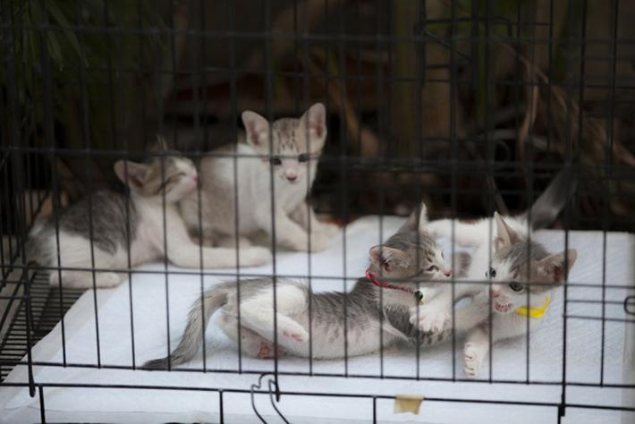 Darum tun sie nur wenig, um die Situation zu verbergen. Rassehunde, Katzen oder Singvögel, die Haustiere werden nicht einmal gesäubert oder vorher gefüttert. (#02)