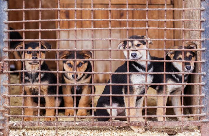 """Der Markt """"La Batte"""", der wöchentlich stattfindet, ist international bekannt. Hier gibt es neben den Leckereien, Haushaltswaren und Kleidung auch einen Tiermarkt. Eigentlich ist es inzwischen gesetzlich verboten, direkt auf diesem Markt Haustiere zu verkaufen. (#01)"""