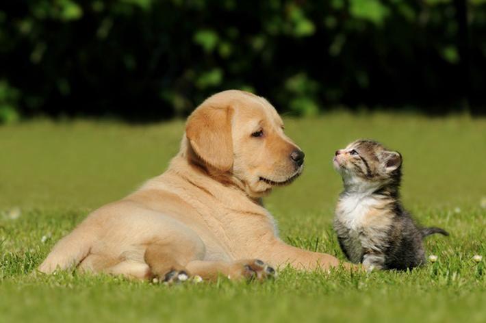 Im Vergleich zu der Atmosphäre auf dem Hundemarkt in Belgien ist die Situation im Tierheim sehr viel entspannter. Die Heimtiere selbst fühlen sich deutlich wohler und sind nicht so vernachlässigt. (#04)