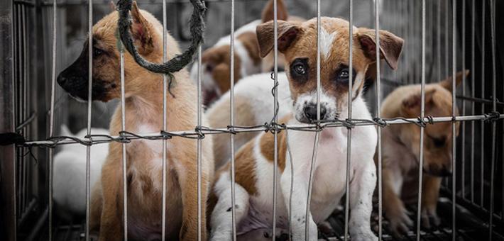Der Hundemarkt in Belgien - ein schwieriges Pflaster