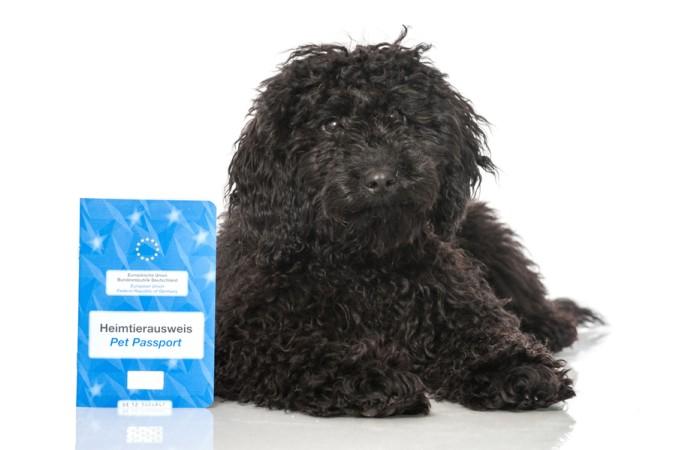 Für eine Reise nach Frankreich sollte der Impfpass des Hundes aktuell sein. (#1)