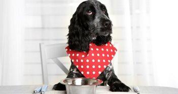 Gesundes Futter für den Hund