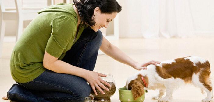 Hundefutter als Kommunikationsmöglichkeit?