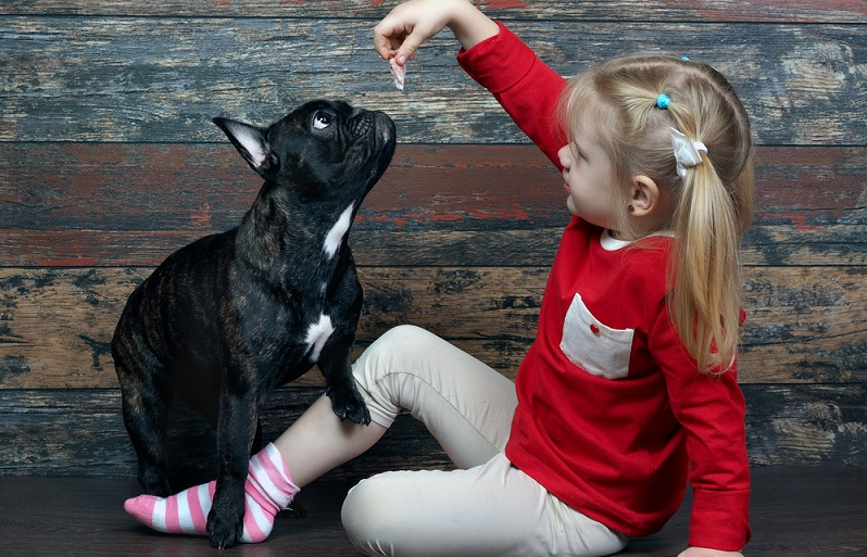 Sicherlich haben die Hunde nicht das erste Mal ein Leckerchen von ihrem Herrechen oder Frauchen bekommen. Das heißt, sie haben vielleicht sogar bereits gelernt, mit Betteln ihr Ziel zu erreichen. (#02)