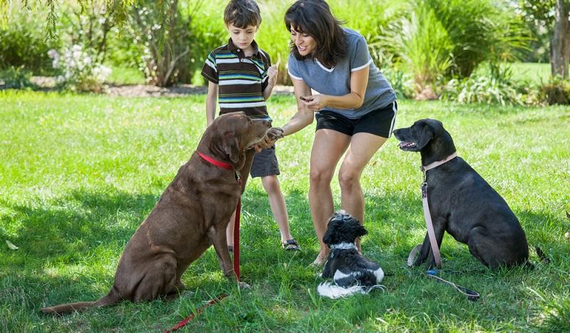 Interessant ist, dass Stiftung Warentest zwar herausgefunden und bestätigt hat, dass auch die Billigfutter völlig ausreichend sind und einen Hund durchaus ausgewogen und gesund ernähren können, dass aber dieser Fakt seitens der Tierhalter völlig ausgeblendet wird. (#03)