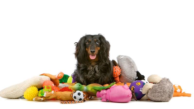 Bei den frisch gebackenen Hundebesitzern geht es natürlich auch um die Grundausstattung, die benötigt wird. (#04)
